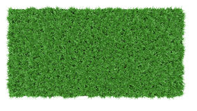 Beautiful green grass background texture Royalty Free Stock Images