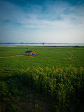 Beautiful green grass and blue sky. By the Taungthaman lake, near by U-bein bridge, Amarapura Myanmar Stock Images