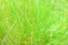 Beautiful green grass. Royalty Free Stock Photo