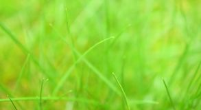 Beautiful green grass. Royalty Free Stock Images