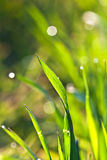 Beautiful green grass in detail Royalty Free Stock Images