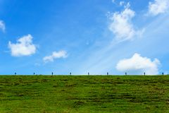 Beautiful green grass on the earth wall of dam with blue sky with cloud for background or wallpaper. Royalty Free Stock Photography