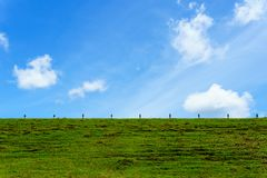 Beautiful green grass on the earth wall of dam with blue sky with cloud for background or wallpaper Stock Image