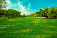Beautiful green grass field and fresh plant in vibrant meadow ag Stock Images
