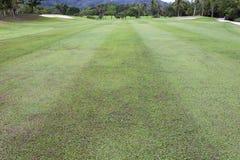 Beautiful green grass field of golf course.  stock photo