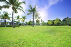 Beautiful green grass field in public park against vibrant blue. Sky and sun shining above Royalty Free Stock Photography