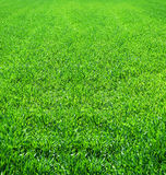 Beautiful green grass field scenic Stock Image