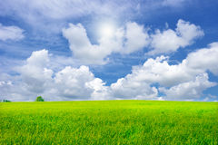 Beautiful green grass field in vibrant meadow Royalty Free Stock Image