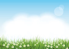 Beautiful green grass ,Flowers,Fluffy Clouds and light blue sky Royalty Free Stock Images