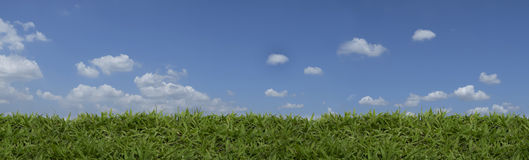 Beautiful green grass panorama Stock Images