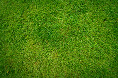 Beautiful green grass pattern Royalty Free Stock Images
