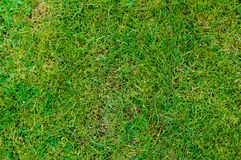 Beautiful green grass pattern Royalty Free Stock Photos