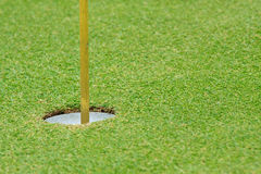 Beautiful green grass pattern of golf course Royalty Free Stock Photography