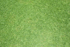 Beautiful green grass pattern from golf course Stock Image