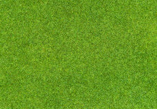 Beautiful green grass pattern from golf course Royalty Free Stock Photo