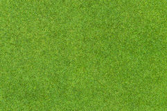 Beautiful green grass pattern from golf course Royalty Free Stock Image