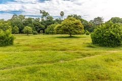 Beautiful Green Grass with Some Trees in a Park. Beautiful Green Grass Surrounded by Trees in a Park Royalty Free Stock Images