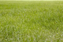 Beautiful green grass texture Stock Photography
