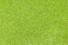 Beautiful green grass texture Royalty Free Stock Images