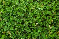 Beautiful green grass texture. stock photos