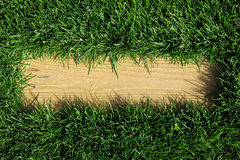Beautiful green grass texture with empty space for text.  Stock Photos