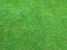 Beautiful green grass texture Stock Images