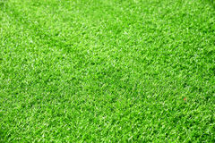 Beautiful green grass texture from golf course Royalty Free Stock Images