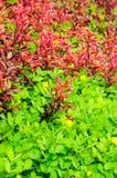 Beautiful green grass texture Stock Photography