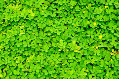 Beautiful green grass texture Stock Images