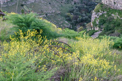 Beautiful green grass valley meadow with yellow flower on rock m. Ountain in daylight summer Matera south Italy Royalty Free Stock Images