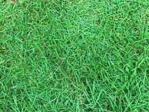 Beautiful green grasses. Nachural grass background stock photography
