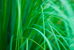 Beautiful green grassy abstract background royalty free stock photography
