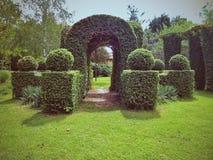 Beautiful green hedge gate. On a green grass Stock Photo