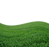 Beautiful Green Hilly Field on White Stock Photos