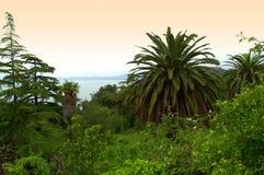 Beautiful green island forest Stock Photo