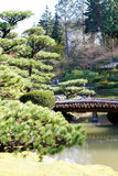Beautiful green japanese garde Royalty Free Stock Photo