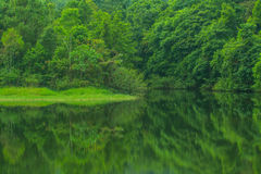 Beautiful green lake mountain forest Royalty Free Stock Images
