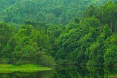 Beautiful green lake mountain forest Stock Photo