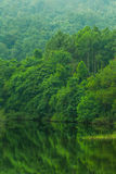 Beautiful green lake mountain forest Royalty Free Stock Photography