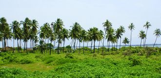 Beautiful green landscape. Quite beautiful landscape overlooking sea , full of greenery and coconut trees Stock Image