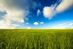 Beautiful green landscape Royalty Free Stock Photo