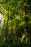 Beautiful green landscape in the amazon rainforest Royalty Free Stock Images