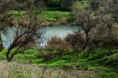 Beautiful green landscape. Fresh green grass near a lake near a forest Stock Images