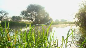 Beautiful green landscape, grass and trees near water, sunshine. Stock footage stock video
