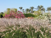 Beautiful green landscape on site in Egypt. Africa. stock photography
