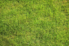 Beautiful green lawn perfectly cut for background Stock Photography
