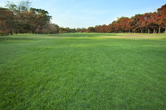 Beautiful green lawn in public park Royalty Free Stock Photo