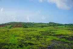 Beautiful green lawn with small interesting stones, on the peninsula near the village Gokarna. India royalty free stock image