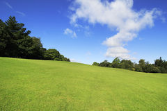Beautiful green lawn in summer park. Royalty Free Stock Photos