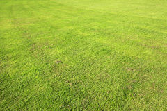 Beautiful green lawn in summer park. Royalty Free Stock Image